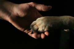 Best Friends. Dogs paw holding man's hand Royalty Free Stock Photo