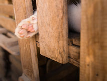 Paw of Kitten. Out of  The Wooden Box Stock Photo
