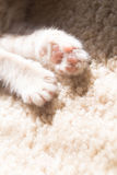 Paw from a kitten. A paw from  a kitten from 12 weeks old in the sun Royalty Free Stock Image