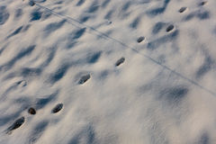 Paw marks in snow Stock Images