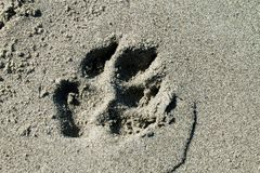 Paw. Of dog on the beach Royalty Free Stock Image