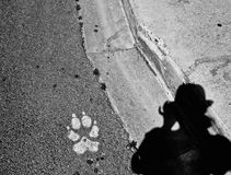Paw and photographer`s shadow Stock Photography