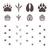 Paw Print illustrazione di stock