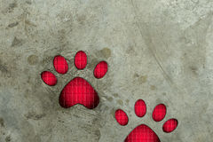Paw print on cement floor. Royalty Free Stock Photography