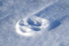 Paw print. Close up of a paw print on a frozen snow drift Stock Photography
