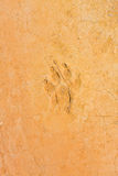 Paw print on desert soil Royalty Free Stock Images