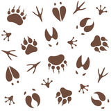 Paw Print. Pattern Royalty Free Stock Photo