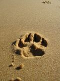 Paw Print in Sand. A deep single dog paw print in wet sand Stock Photos