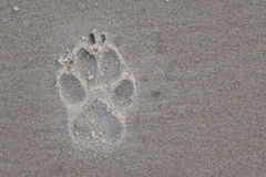 Paw Print in the Sand. With Copy Space to Right stock image
