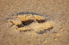 Paw print in sand. Dog Paw print on sandy Beach Stock Photography