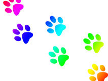 Paw print trail Royalty Free Stock Images