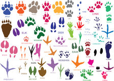 Free Paw Prints Stock Photography - 10474612