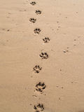 Paw prints. Dogs paw prints in the sand stock photos
