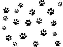 Paw prints. On white background Stock Image