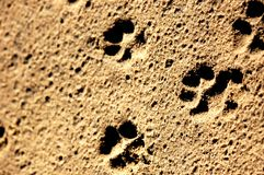 Paw Prints. Image of animals paw prints in the sand Royalty Free Stock Images