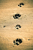 Paw prints at beach. Dog paw print in wet sand Stock Photography
