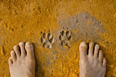 Paw Prints and a pair of feet. Paw Prints of a dog and human feet in soft sand on the beach Stock Images