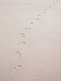 Paw prints in sand Stock Photography