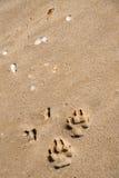 Paw prints on a sand beach. Paw prints on a seashore sand beach royalty free stock photo