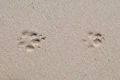 Paw Prints in the Sand. Paw prints in the pink sandy beach, at Horseshoe Bay, Bermuda stock image