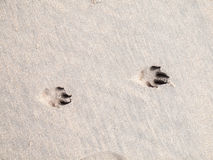 Paw prints in sand Stock Photos