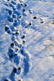 Paw prints in snow. Paw prints in fresh and fluffy snow Stock Photos