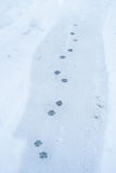 Paw prints on snow Stock Photos