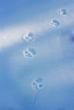 Paw prints in the snow Royalty Free Stock Photo