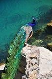 Paw przy błękitnym jeziorem w Abkhazia Zdjęcia Royalty Free