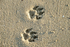 Paw  in sand Stock Photo