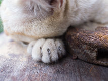 Paw of Stray Cat Yellow White Striped Head Notch Sleeping. With Old Hammer Royalty Free Stock Photos