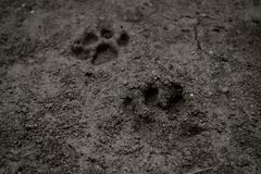Paw. Traces of cat after the rain Royalty Free Stock Photos