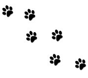 Paw tracks. Isolated on white background Royalty Free Stock Photography