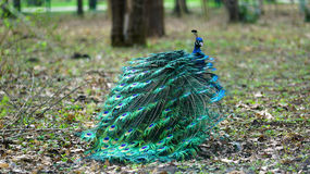 Paw w naturze Fotografia Royalty Free