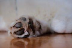 The paw Stock Photos
