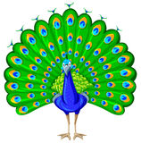 Paw z kolorowym piórkiem Zdjęcia Royalty Free