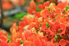 Pawi kwiat Obrazy Royalty Free