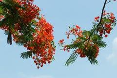 Pawi kwiaty zdjęcie stock