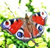 Pawi motyl Zdjęcie Stock