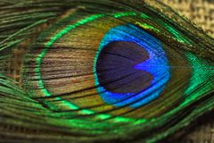Pawi piórka Zdjęcia Royalty Free
