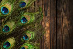 Pawi piórka dekorują pionowo ciemną drewnianą brąz deskę Fotografia Stock