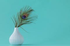 Pawi piórka na prostym tle Obrazy Royalty Free
