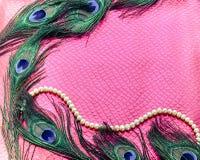 Pawi piórka na różowym tle obrazy stock