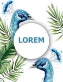 Pawia akwarela wektoru karta Błękitnego ptaka zwrotnika lata egzotyczni szablony ilustracji