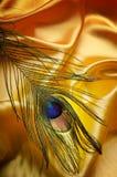 Pawia piórko Obraz Stock