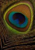 Pawia Piórko na czarny tła macro zbliżeniu obrazy stock
