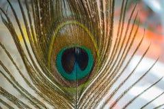 Pawia piórkowy makro- Obraz Royalty Free