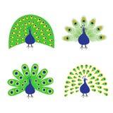 Pawia set Piórka out otwarty ogon Piękny Egzotyczny tropikalny ptak Zoo zwierzęcia kolekcja Śliczny postać z kreskówki Dekoraci e ilustracja wektor