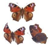 Pawiego motyla set Zdjęcie Stock