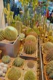 Pawilon kaktusy Obrazy Stock